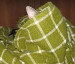 Meglio nascondersi.JPG