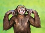scimmia_sorride--400x300.jpg