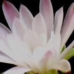 Piante grasse in fiore 2