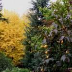 Vista dal mio giardino