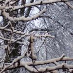 Neve2