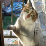 Betta vuole entrare