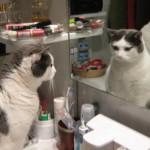 Lilli allo specchio