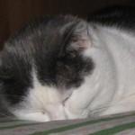 Dormire alla grossa
