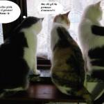 3 gatti